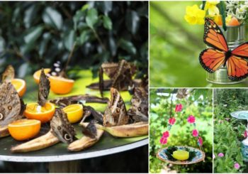 10 DIY Butterfly Feeders That Will Add Beauty And Butterflies To Your Garden